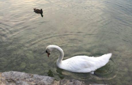 סיכום חופשה משפחתית קרואטיה – סלובניה